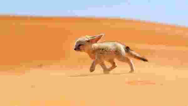 بحث عن خصائص الحيوانات والنباتات التي تعيش في الصحراء شامل ومفصل زيادة
