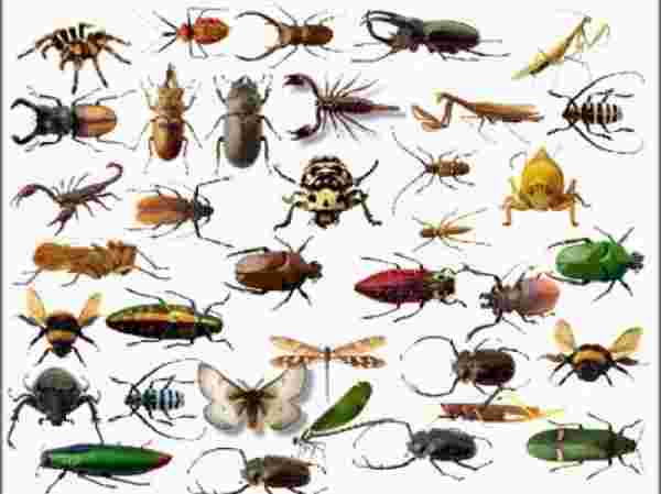 تفسير رؤية الحشرات في المنام على الجسم والطائرة وهجومها زيادة