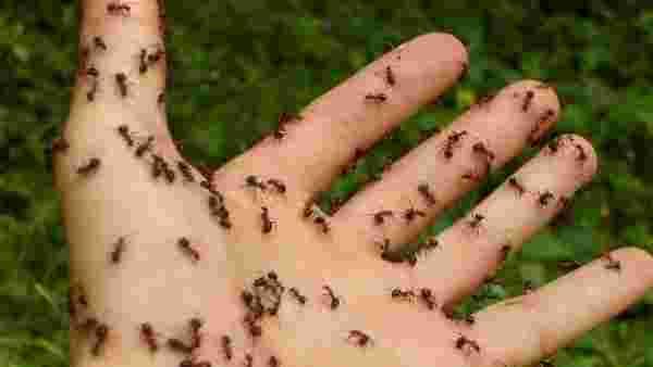 رؤية النمل في المنام للمرأة والرجل وللمفسرين ابن سيرين والإمام الصادق زيادة