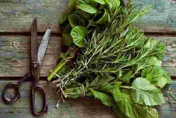 علاج التهابات الأذن من خلال الأعشاب