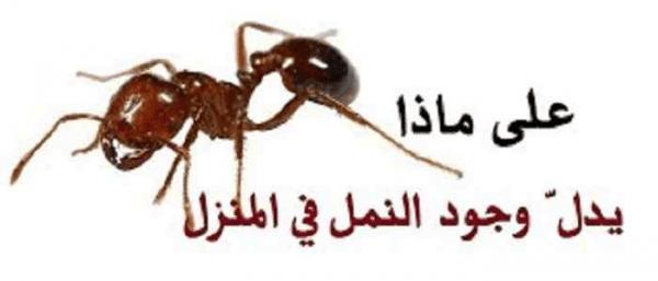 هل وجود النمل في البيت يدل على الرزق زيادة
