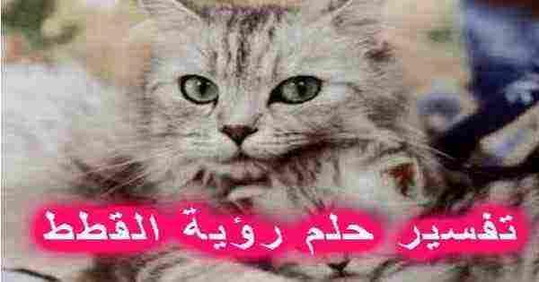 تفسير رؤية القطط في المنام والخوف منها زيادة