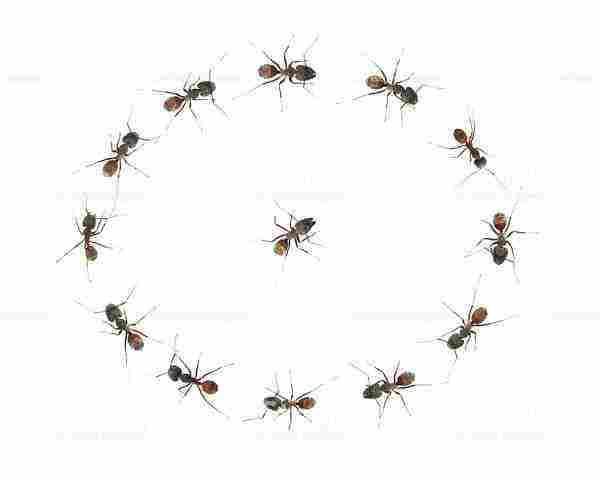 تغيير الملابس على فكرة فكر للامام وجود النمل الصغير في المنزل Dsvdedommel Com
