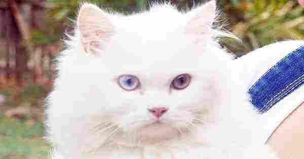 تفسير إبعاد القطط في المنام وابعادها والخوف منها للعزباء والحامل والمتزوجة زيادة