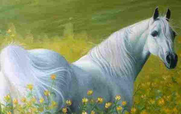 رؤية الحصان في المنام للعزباء وللمرأة المتزوجة وللحامل وللرجل زيادة
