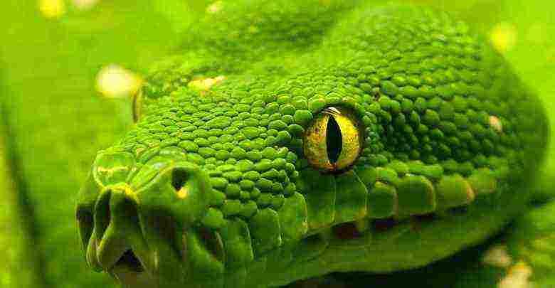 تفسير حلم الثعابين الصغيرة والكبيرة في البستان وبيضها لابن سيرين زيادة