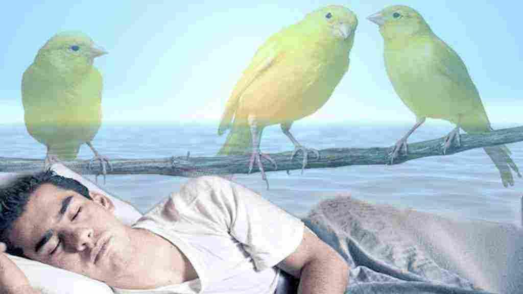 رؤية الطيور الملونة في المنام بكافة تأويلاته زيادة