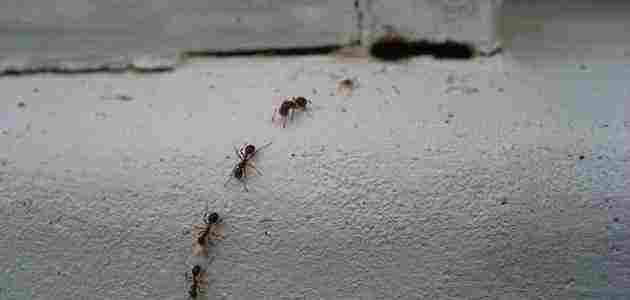 سبب وجود النمل في غرفة النوم وكيفية التخلص منه زيادة