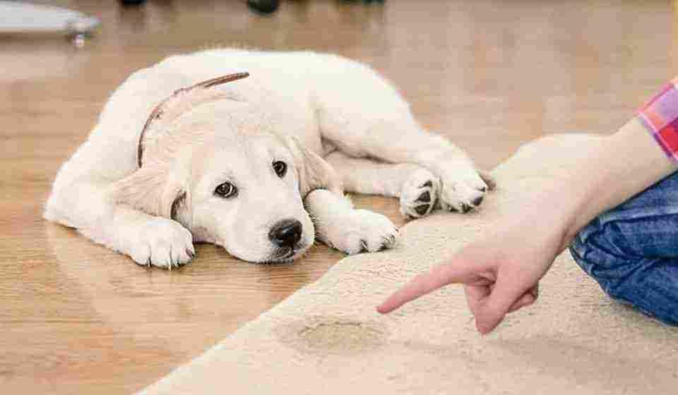 بول الكلب في المنام وإطعامها وطردها وبول الحيوانات والبول الأحمر زيادة