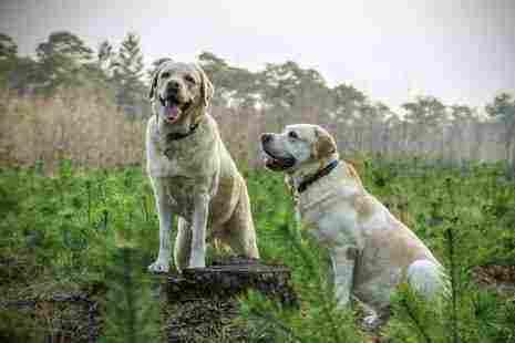 تفسير رؤية الكلبة في المنام للعزباء زيادة