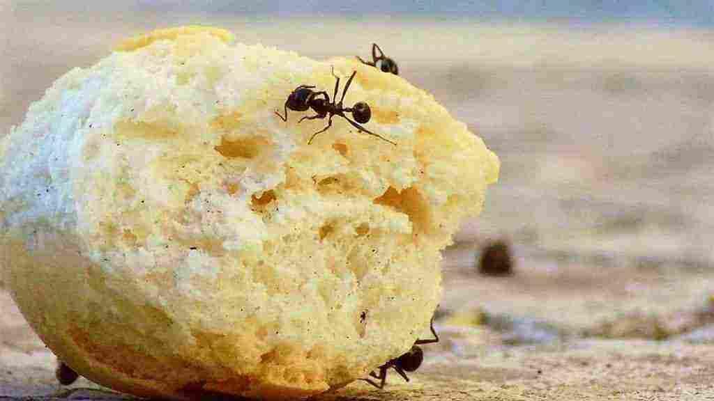 وجود النمل في البيت وهل انتشار النمل في المنزل له علاقة بالحسد زيادة