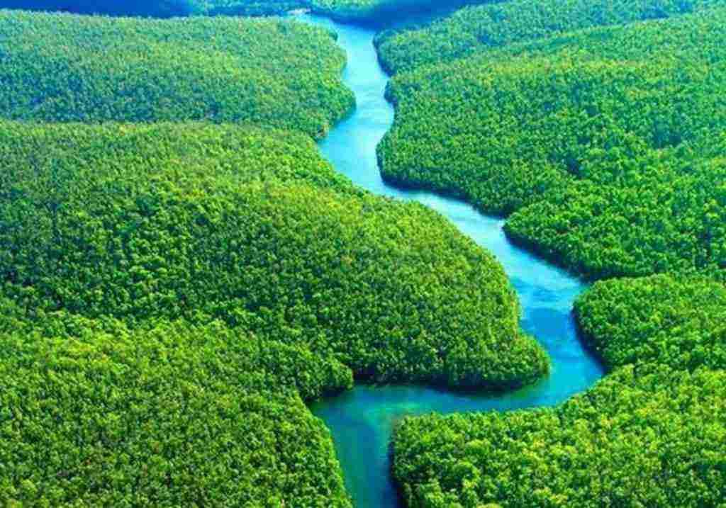 أين تقع غابات الأمازون وبعض المعلومات عنها زيادة