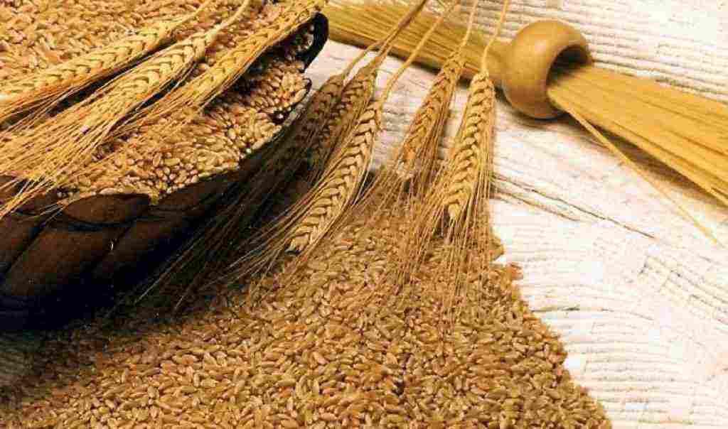 ما الفرق بين القمح والشعير وأيهما أفضل وفوائد وأضرار كلا منهما زيادة