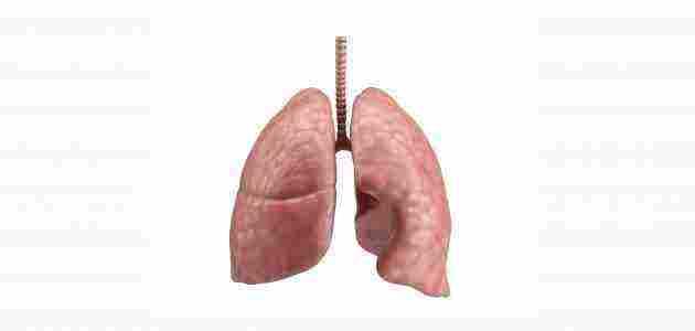 اين تقع الرئتين في جسم الانسان وما هي وظيفتها زيادة