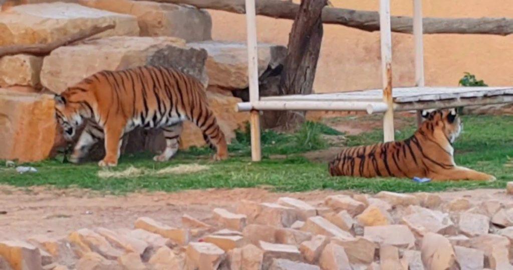 حديقة الحيوانات في الرياض