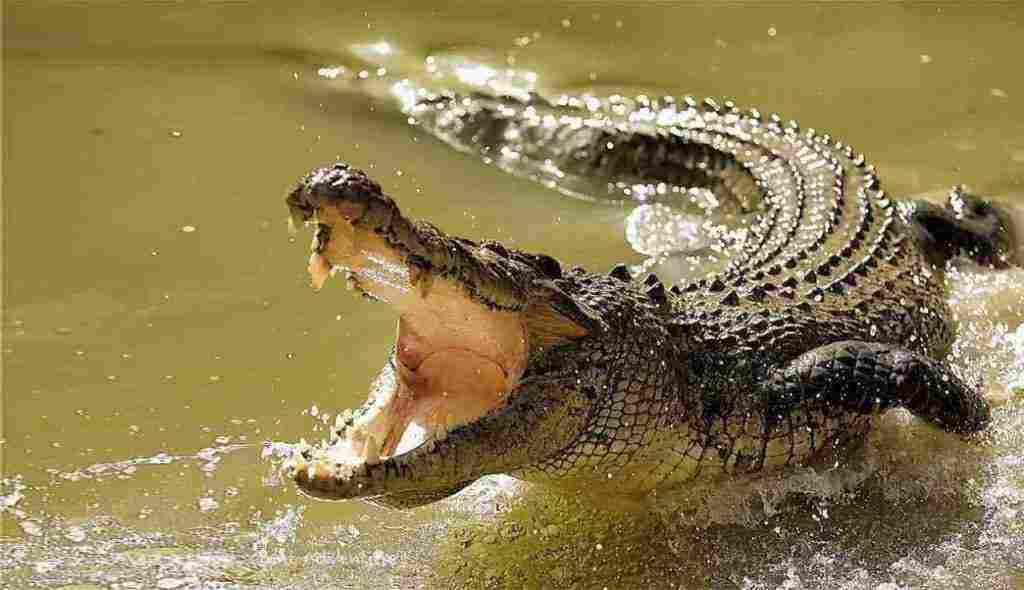 هل يجوز اكل التمساح متى يتم تحريم الأشياء رأي موقع إسلام ويب زيادة
