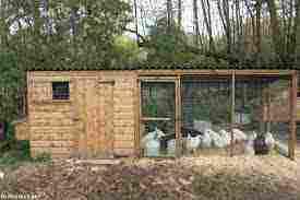 ماذا يسمى بيت الدجاج كيف يتكاثروا زيادة