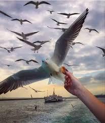 الطيور على اشكالها تقع