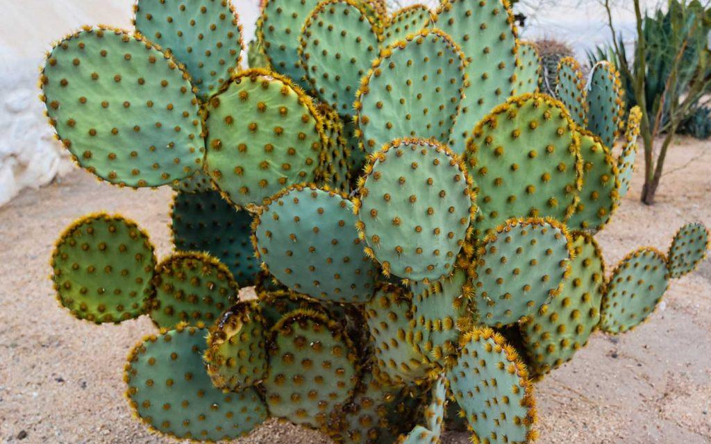 أنواع النباتات التي تعيش في الصحراء وخصائص تكيفها مع البيئة زيادة