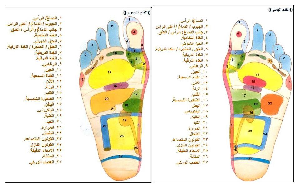 خريطة الجسم في باطن القدم وفوائد علم الانعكاسات موقع إفادة