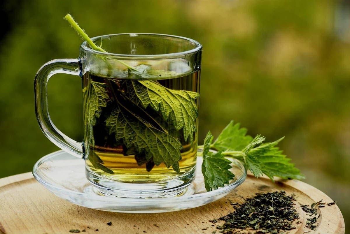 متى تشرب عشبة كف مريم للحمل وطريقة استخدامها وفوائدها وأضرارها زيادة